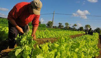 Declaran la emergencia agropecuaria en Corrientes para el sector hortícola