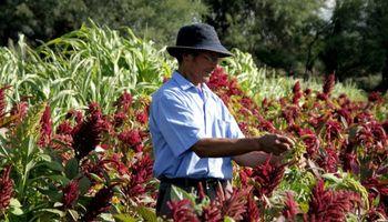 Agricultura creó el Consejo de la Agricultura Familiar, Campesina e Indígena