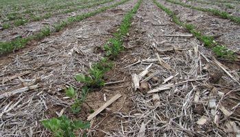 Biosoluciones: qué son y qué aportan a la agricultura