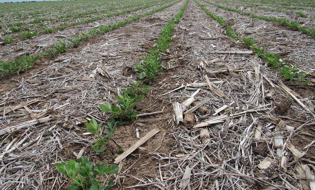Producir alimentos de forma sostenible es el gran desafío del siglo XX