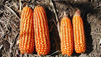 Red de Nutrición de Cultivos: los principales resultados de 20 años de ensayos