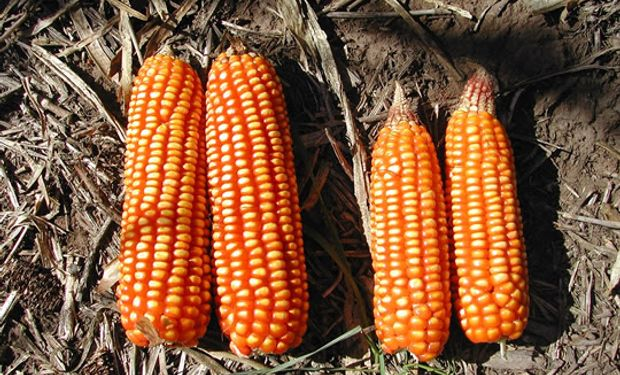En 1999 la Región CREA Sur de Santa Fe creó la Red de Ensayos en Nutrición de Cultivos frente a la necesidad de generar información local.