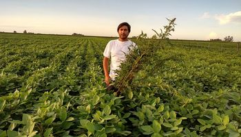 Herbicidas pre-emergentes selectivos y con alto poder residual: combo ideal para acelerar la siembra de soja