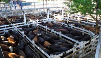 Se repite la demanda por lotes de vacas en Liniers, lo que se refleja en los precios