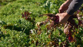 Huerta familiar: entregaron 50 mil kits de semillas y se inicia la segunda etapa