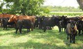 Carne argentina a Colombia: frigoríficos bonaerenses recibieron el 72% del cupo de exportación