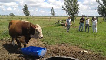 Los mejores Hereford llegan a AgroActiva de la mano de La Yunta