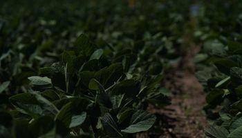 Remigate: por qué este nuevo herbicida es la Fórmula 1 del control