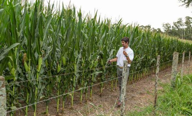 Los híbridos de maíz Brevant™ se adaptan perfectamente a los planteos de siembra tardía.