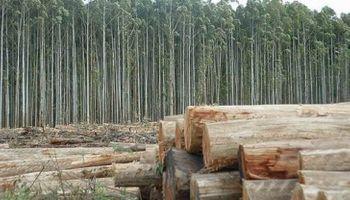 Se prorrogó la ley de inversiones para los bosques cultivados
