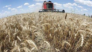 Buscan avanzar en la organización de la oferta comercial del trigo argentino