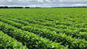 Soja HB4 suma un nuevo mercado tras la aprobación de Paraguay