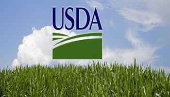 USDA: primeros datos con tinte negro