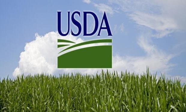 Las expectativas están puestas en el informe del USDA de mañana.