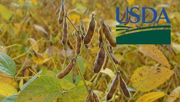 USDA: mercado espera un recorte en la producción argentina