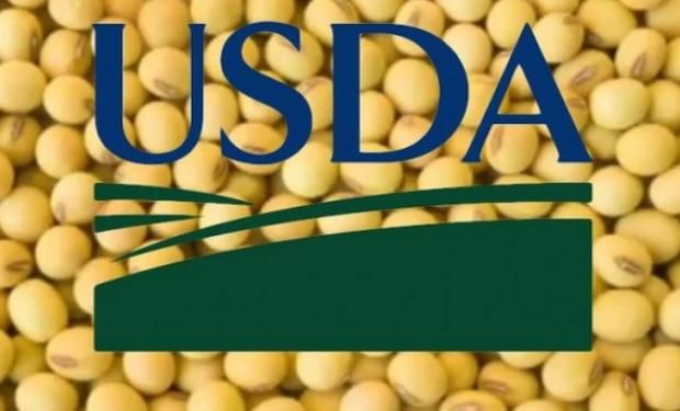 Operadores esperan un incremento en los rindes de soja