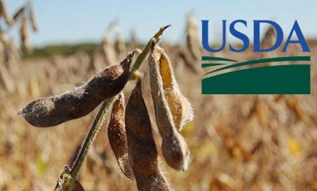Primeros datos del USDA con tinte alcista.