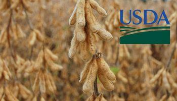 USDA: lo más destacado del reporte de febrero