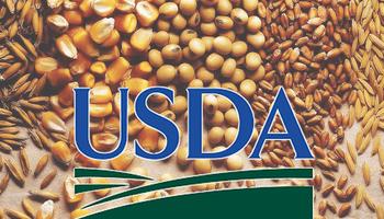 Cuáles fueron las sorpresas del informe del USDA de noviembre