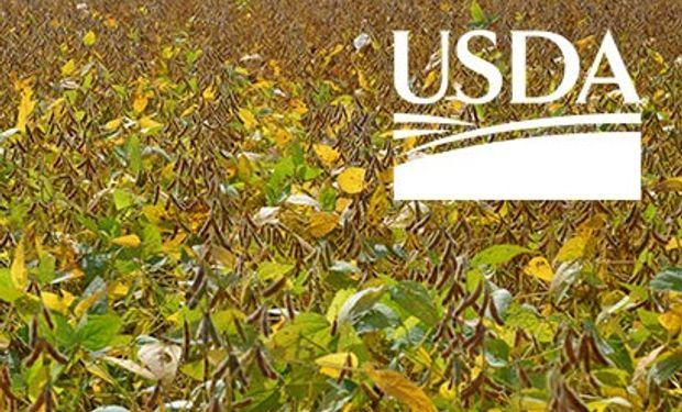Reporte del USDA de octubre.