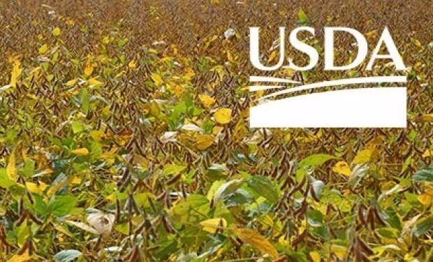 Primeros datos del USDA.