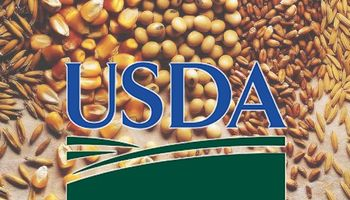 ¿Más soja? Mirá las expectativas para el USDA