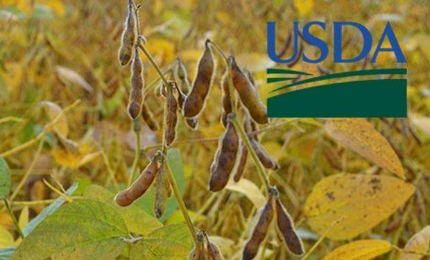 Primeros datos del USDA de septiembre.