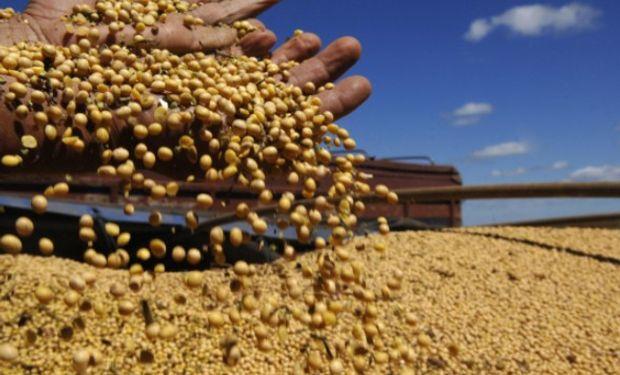 SOJA. Para nuestro país se espera que el organismo proyecte 54,1 millones de toneladas mientras que para Brasil se esperan 111,2 mill.tt.