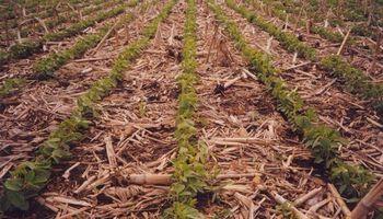Suelos agradecidos: panorama favorable para el uso de fertilizantes