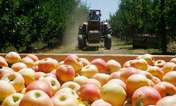 ¿Es correcto decir que una fruta u hortaliza con presencia de agroquímicos es tóxica?