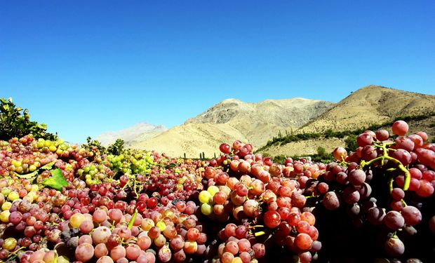 Frutas: suben precios por situación crítica en Cuyo