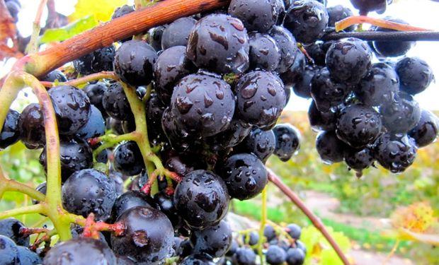 Argentina es el octavo país productor de vino a nivel mundial.