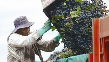 Aumentó más de un 50 % la exportación de vino y aseguran que es por el dólar competitivo