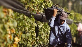 Economías regionales: productores anticipan pérdidas ante la imposibilidad de contar con trabajadores golondrinas
