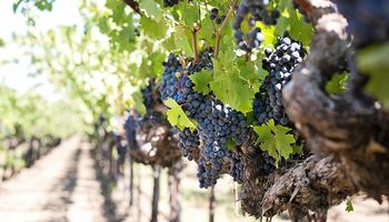 Referentes vitivinícolas apoyaron el acuerdo entre Mendoza y San Juan para potenciar al sector