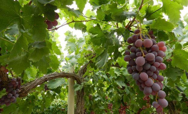 Se aconseja a los productores asesorarse debidamente en cuanto a la elección del producto fitosanitario más adecuado.