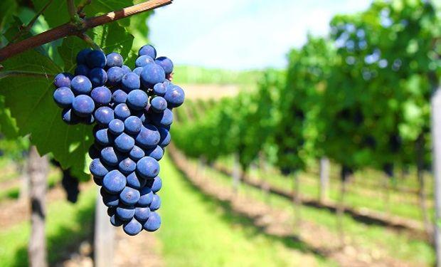 El proyecto aprobado esta semana en Diputados torna obligatorio realizar un contrato de compra de uva.