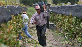Aumentó un 30 % el aporte de bodegas al plan vitivinícola y continúa la tensión con Bodegas Argentinas