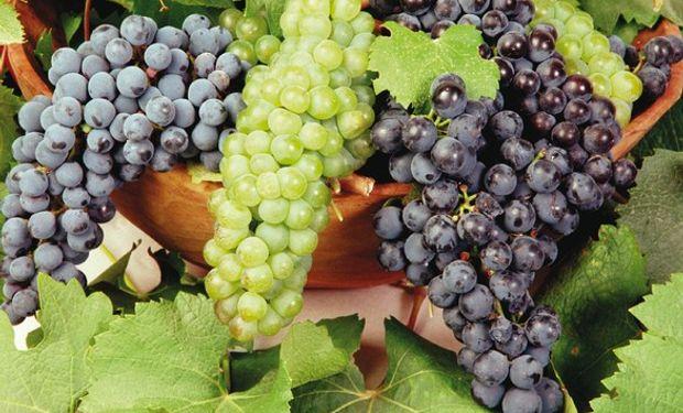 Las uvas frescas del Alto Valle y de Mendoza son tan sólo uno de los tantos productos argentinos que se verán afectados por la caída de exportaciones.