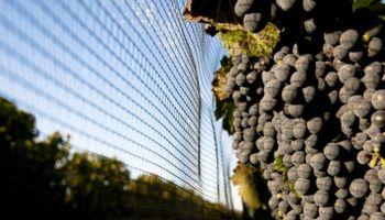 Contratistas de Viñas y Frutales: una figura de larga evolución