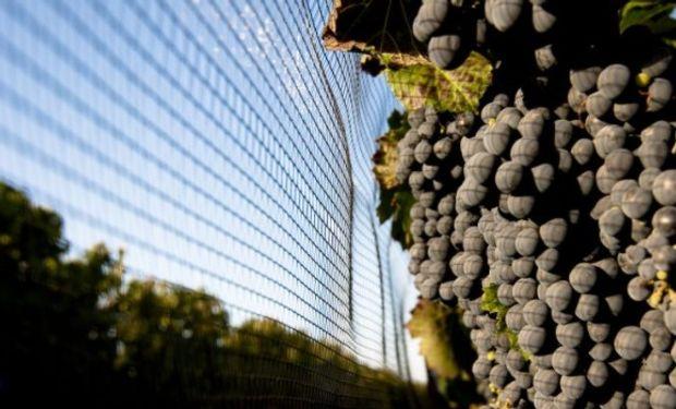 Evolución de la figura legal del contratista de viñas y frutales.
