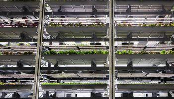 Agricultura vertical: crece la tendencia y una startup recaudó US$ 300 millones