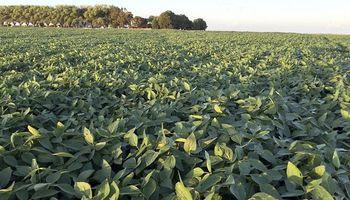 Seguros agrícolas: tres compañías concentran el 57% de la cobertura total