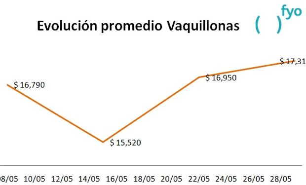 El gráfico muestra la evolución del precio promedio de la categoría Vaquillonas en el Mercado de Liniers durante el mes de mayo. Fuente: fyo
