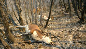 Por incendios, declaran la emergencia agropecuaria en Chubut