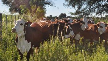 Argentina tiene la oportunidad de duplicar su producción de carne por unidad de superficie