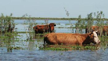 Recomendaciones para el manejo de ganado durante la emergencia hídrica