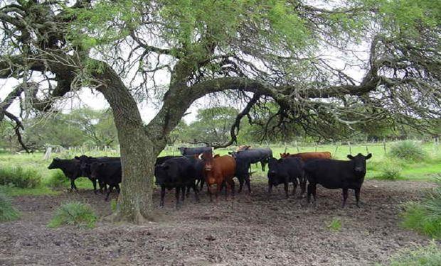 Recomendaciones para almacenar carbono en sistemas ganaderos