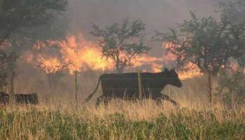 La Pampa: siguen activos doce focos de incendios y piden ayuda para los productores que perdieron todo