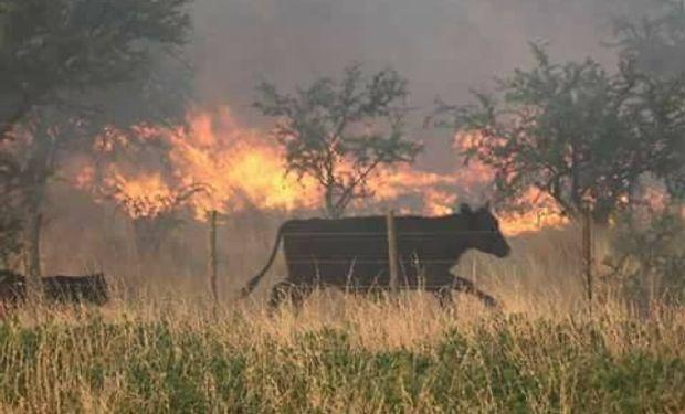 Mas de 800.000 hectáreas están siendo afectadas por el fuego.